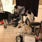 Animal Filmakers, spot per attori cani