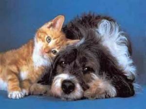 Siete pronti a filmare le prodezze dei vostri amici animali?