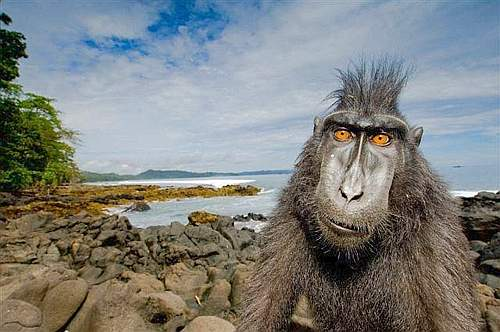 Wildlife Photographer - Il Piantagrane